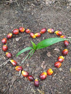 Palm Oil-Kelapa Sawit