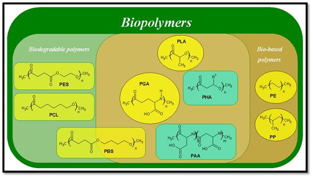 biopolymers framed
